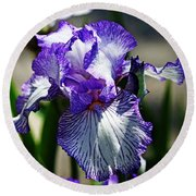 Iris Dressed For Royalty Round Beach Towel