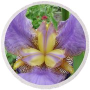 Iris Flower Lavender Purple Yellow Irises Garden 19 Art Prints Baslee Troutman Round Beach Towel