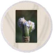 Iris Flower Starts To Reveal And Design Round Beach Towel