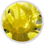 Iris Flower Yellow Macro Close Up Irises 30 Sunlit Iris Art Print Baslee Troutman Round Beach Towel