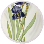 Iris Germanica Round Beach Towel by Pierre Joseph Redoute