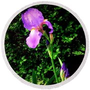 Iris In Sunshine Round Beach Towel
