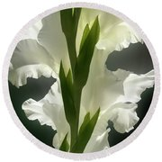 Gladiolus Spectacular #2 Round Beach Towel