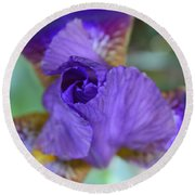 Iris Square Round Beach Towel