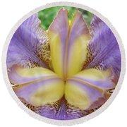 Irises Art Purple Yellow Iris Flowers Giclee Prints Baslee Troutman  Round Beach Towel