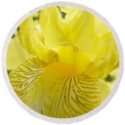 Irises Yellow Brown Iris Flowers Irises Art Prints Baslee Troutman Round Beach Towel