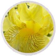 Irises Yellow Brown Iris Flowers Irises Art Prints Baslee Troutman Round Beach Towel