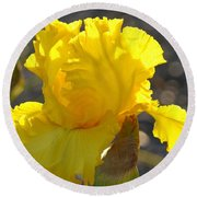 Irises Yellow Iris Flowers Art Prints Floral Canvas Baslee Troutman Round Beach Towel