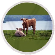 Irish Calves At Lough Eske Round Beach Towel