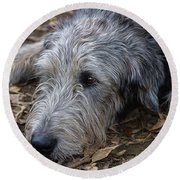 Irish Wolfhound Ivan Round Beach Towel