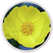 Island Bush Poppy In Rancho Santa Ana Botanic Garden In Claremont-california  Round Beach Towel
