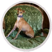 Italian Greyhound Portrait Round Beach Towel