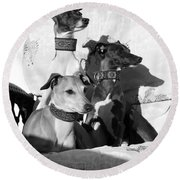 Italian Greyhounds In Black And White Round Beach Towel