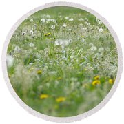 It's Dandelion Time Round Beach Towel