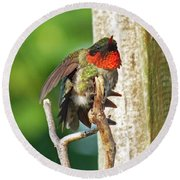 I've Got An Itch - Ruby-throated Hummingbird Round Beach Towel