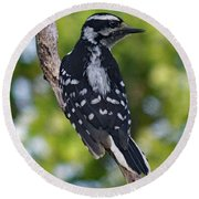 I've Got Your Back - Female Downy Woodpecker Round Beach Towel