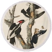 Ivory-billed Woodpecker Round Beach Towel