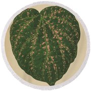 Ivy Leaf, Cissus Porphyrophyllus  Round Beach Towel