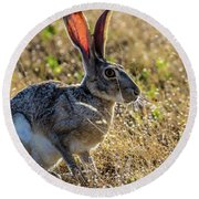 Jack Rabbit Round Beach Towel