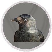 Jackdaw Corvus Monedula Bird Portrait Vector Round Beach Towel