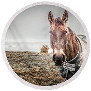 Jacketed Horse Round Beach Towel
