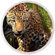 Jaguar Adolescent Round Beach Towel