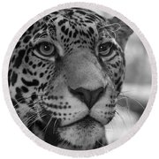 Jaguar In Black And White Round Beach Towel