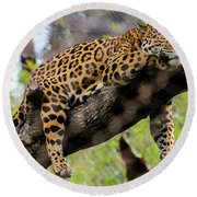 Jaguar Relaxation Round Beach Towel
