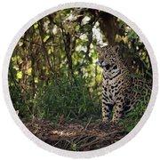 Jaguar Sitting In Trees In Dappled Sunlight Round Beach Towel