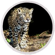 Jaguar Stare Round Beach Towel