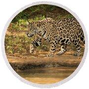 Jaguar Walking Beside River In Dappled Sunlight Round Beach Towel