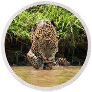Jaguar Walking Through Muddy Shallows Towards Camera Round Beach Towel