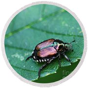 Japanese Beetle Round Beach Towel