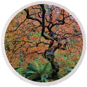 Japanese Garden Lace Leaf Maple Tree In Fall Round Beach Towel
