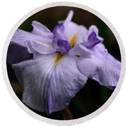 Japanese Iris In Bloom Round Beach Towel