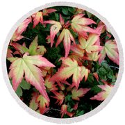 Japanese Maple Round Beach Towel by Cynthia Adams