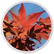 Japanese Maple In Sunlight Round Beach Towel