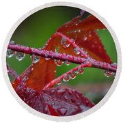 Japanese Maple On A Rainy Day Round Beach Towel
