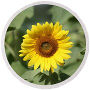 Jarrettsville Sunflowers - The Star Of The Show Round Beach Towel