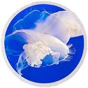 Jellies In Jellyfish Tank In Monterey Aquarium-california Round Beach Towel