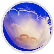 Jelly In Jellyfish Tank In Monterey Aquarium-california Round Beach Towel