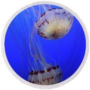 Jellyfish 1 Round Beach Towel