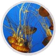 Jellyfish Family Round Beach Towel