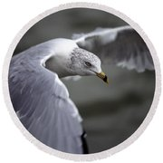 Johnathan Livingston Seagull Round Beach Towel