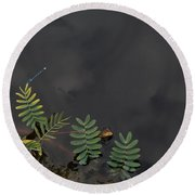 Joint Vetch With Dragon Fly Round Beach Towel