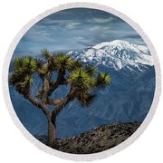 Joshua Tree At Keys View In Joshua Park National Park Round Beach Towel