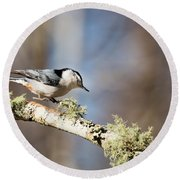 Jump - White-breasted Nuthatch Round Beach Towel