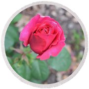 June Rose #5 Round Beach Towel