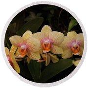 Jungle Orchids Round Beach Towel