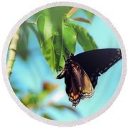 Just Hanging Out - Red-spotted Purple Butterfly Round Beach Towel